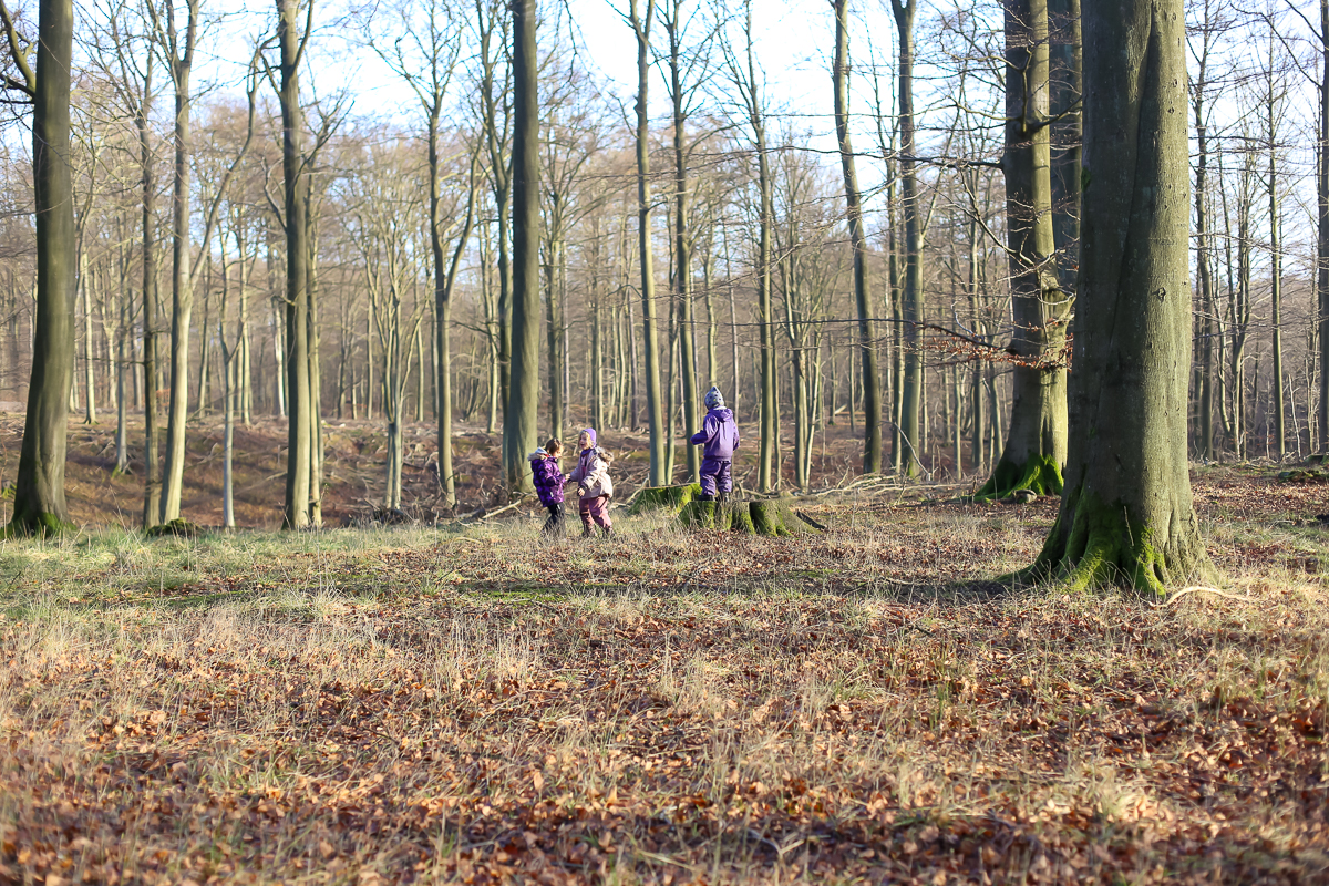 Revising the forest school to tag along as a parent in Denmark.