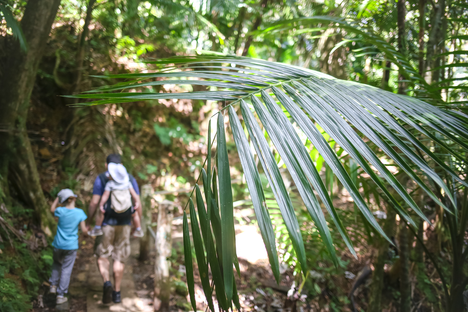Hiking with Kids in El Yunque Rainforest in Puerto Rico.